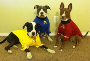 Star Trek Dog Costume